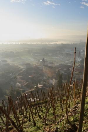 morgon i Condrieus vingårdar