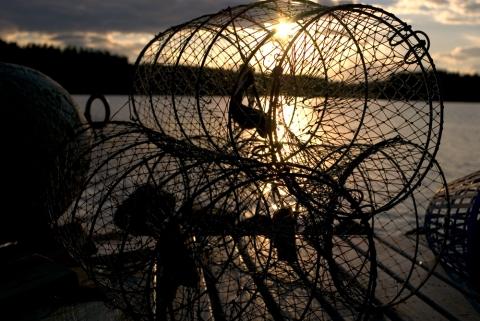 Kräftburar redo för fiske