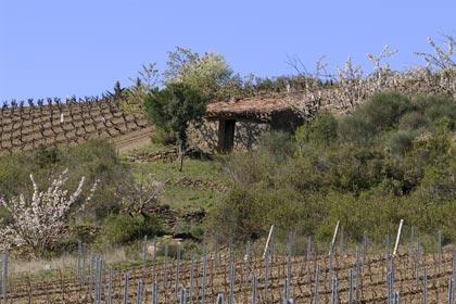 Minervois vinfält