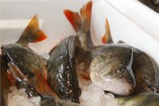 Mälarfisken från Ängsö fisk